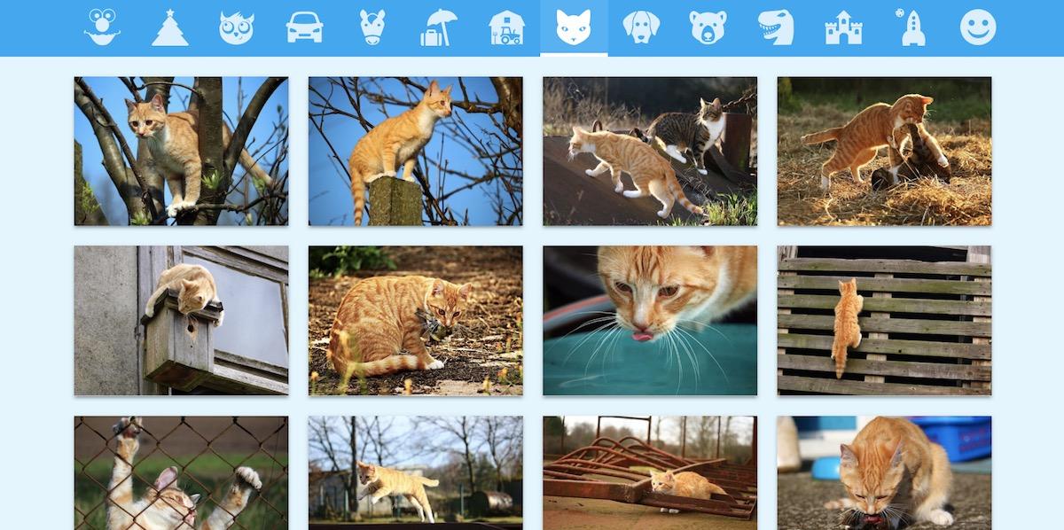 image bank cat